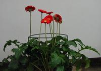 Przystawki kwiatowe
