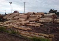 Skup i sprzedaż drewna